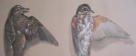 Dead Birds Brandeis